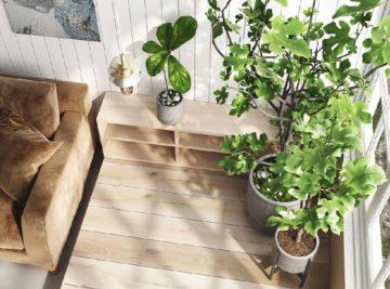Le piante che migliorano la salute all'interno di un ambiente